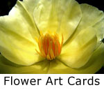 Flowers on Notecards